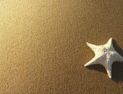 Starfish over sand